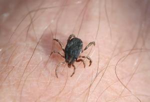 Zecken machen vielen Menschen Angst, doch nur wenige Exemplare sind tatsächlich Krankheitsüberträger. Foto: epd